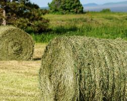 make-hay-while-the-sun-shines